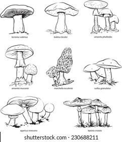 Mushrooms for coloring.