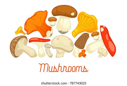 Mushrooms edible mushrooming poster. Vector flat champignon and boletus or forest chanterelle and lobster mushroom