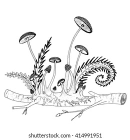 Mushrooms and ferns on a twig. Printable hand drawn coloring book page for adult recreation. Relaxing, stress free activity. EPS 10