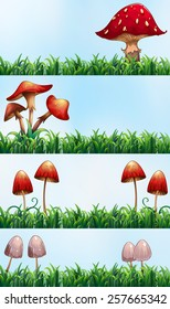mushrooms and grass