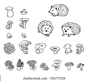 Mushrooms and hedgehog hand drawn vector outline set. Isolated Sketch organic food drawing objects. Hedgehog, champignon, enokitake, porcini, oyster, honey agaric, chanterelle, fungi, russula.