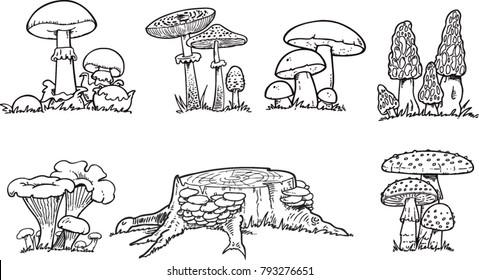 Mushrooms. Organic vegetarian product