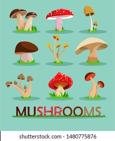 Mushrooms set.  Mushrooms vector illustration set.Mushrooms for cook food and poisonous mushrooms. Vector stock.