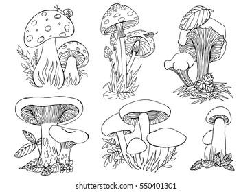 Mushrooms. Vector illustration hand drawn sketch outline set