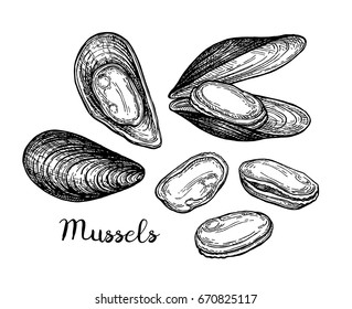 Mussels ink sketch. Isolated on white background. Hand drawn vector illustration. Retro style.