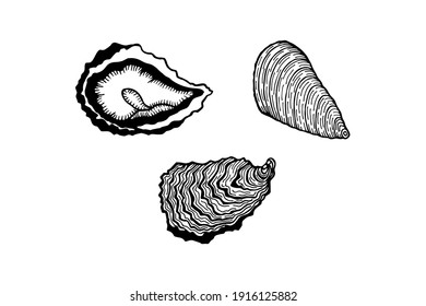 Mussels and oysters. Vector stock illustration eps10. Isolate on white background, outline. Hand drawing.