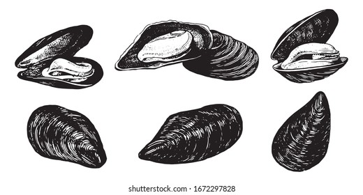 Mussels. Seafood, a set of templates for menu design, packaging, restaurants and catering. Hand drawn images