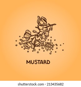 Mustard. Natural spices. Compilation of vector sketches. Kitchen herbs and spice. Vintage style. Hand drawn.