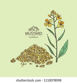 Mustard: plant, mustard seeds, flower, leaves and pod. Dijon mustard. Vector hand drawn illustration.