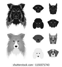 Muzzle of different breeds of dogs.Collie breed dog, lobladore, poodle, boxer set collection icons in black,monochrom style vector symbol stock illustration web.