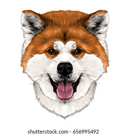 muzzle dog breed Akita-inu with his tongue hanging out, full face looking forward symmetrically, sketch vector graphics color picture