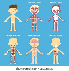 """My body"", educational anatomy body organ chart for kids. Cute cartoon little boy and his bodily systems: muscular, skeletal, circulatory, nervous and digestive."