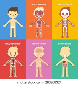 Cartoon Skeletal System Stock Illustrations Images Vectors