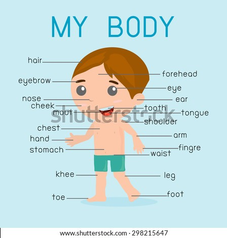 My Body Illustration Poster Parts Body Stock Vector (Royalty Free ...