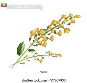 Myanmar Flower, Illustration of Padauk Flowers or Papilionoideae Flowers. The National Flower of Myanmar.