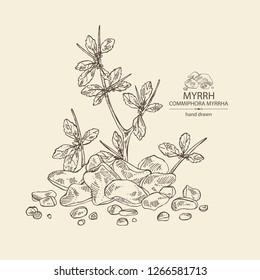 Myrrh: plant and resin of myrrh. Commiphora myrrha. Perfumery, cosmetics and medical plant. Vector hand drawn illustration