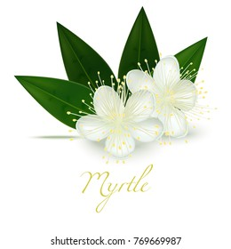 Myrtle Flowers and Leaves. Realistic Elements for Labels of Cosmetic Skin Care Product Design. Vector Isolated Illustration