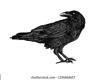 mystical raven bird