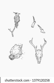 Mythical Illustrations (Outline) ; 1.The crow 2.Winged foot 3.Angry wolves 4.Deer skull