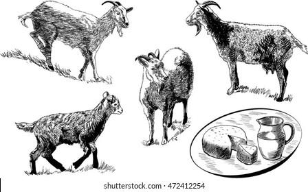 Nanny Goat Images, Stock Photos & Vectors | Shutterstock