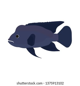 Napoleon fish illustration side view vector icon. Sea underwater blue animal. Cartoon ocean exotic giant silhouette