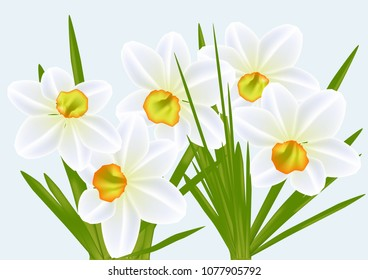 narcissi and blue sky. vector flower
