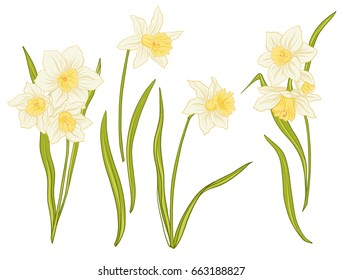 Narcissi flowers. Set of colored flowers.
