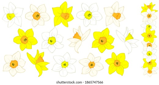 Narcissus flower buds: yellow, orange, white. Hand drawn sketch of blossoming daffodils. Different options. Vector isolated element for spring, wedding, romantic, Easter design, greeting card.