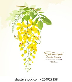 National flower of Thailand, Cassia Fistula, beautiful Yellow Thai flower background, vector illustration