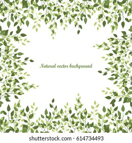 Natural background of birch leaves. Birch leaves on a white background. Vector illustration