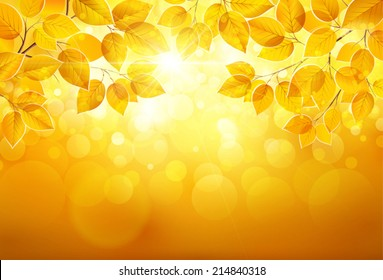Natural background with leaves and bright sunlight. Vector illustration EPS10, transparency