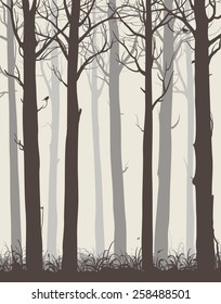 natural background with silhouettes of bare trees and birds