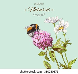 Natural banner with wild flowers and bumblebee.Green background for natural  products, honey, farmers market, homeopathy,beauty store, herbal or honey cosmetics and spa treatment.Vector illustration