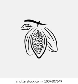 natural cacao vector art, cacao bean vector
