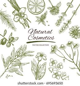 Natural cosmetics frame. Vector hand drawn banner. Herbs and flowers. Herbal  Medicine. Lavender. Camomile.Rosemary.Orange.Jasmine.Tea tree.Mint. Vanilla. Clover. Calendula. Lemon. Argan