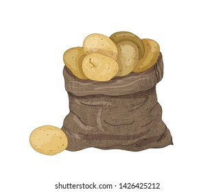 Natural drawing of potato tubers in burlap bag. Gathered raw tuberous food crops. Ripe fresh organic vegetables isolated on white background. Realistic hand drawn vector illustration in vintage style.