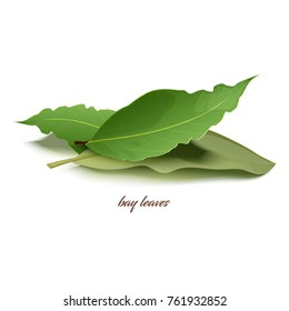 Natural dried bay leaves in small heap that used as special aromatic condiment for dishes isolated cartoon vector illustration on white background.