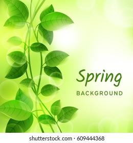 Natural green eco background with leaves and lianas. Spring concept. Vector design illustration.