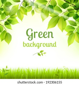 Natural green fresh spring leaves and grass botanic foliage decorative background poster print vector illustration