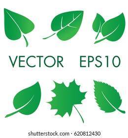 Natural leaf plant vector icon set. Ecology green tree floral symbol.