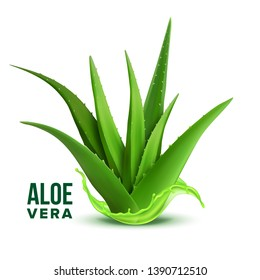 Natural Medicine Foliage Plant Aloe Vera Vector. Realistic Medicinal Vitamin Plant With Fresh Splash Juice. Component Of Cosmetology And Pharmacy Lotion Or Cream For Skin Cure Realistic Illustration