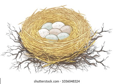 Natural nest of bird with small eggs on twigs and branches