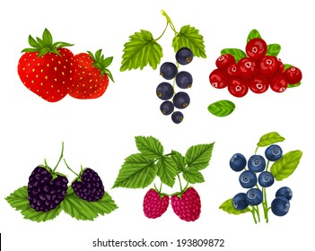 Natural organic berries set of strawberry blackberry cranberry isolated vector illustration