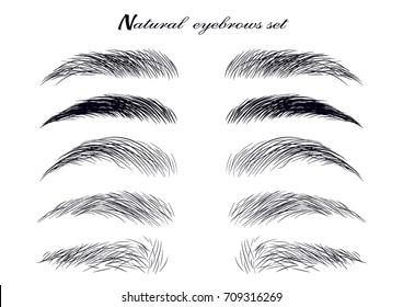 Natural realistic brow sketch set. Forms, shapes and type. Hand-drawn vector illustration.