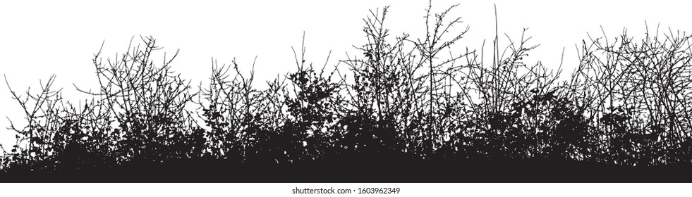 Natural silhouette of bushes with bare branches on a white background (Vector illustration).