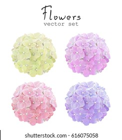 Natural vector set colorful Hydrangea. Floral illustration in vintage watercolor style for your design.