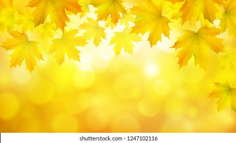 Natural yellow orange horizontal rectangular background with maple leaves snd tree branches, vector autumn background