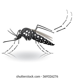Nature, Aedes Aegypti mosquitoes stilt. Ideal for informational and institutional related sanitation and care