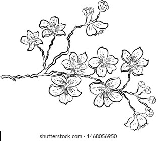 Nature background with blossom branch of sakura flower vector on isolate background.Branch of cherry blossom on white.