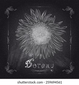Nature background sunflower with your text vector illustration eps 10